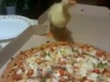 Duck Is Very Hungry And Eat A Pizza