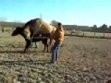Horse Passes Out During Sex