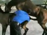 Mating Horse Gets Excited