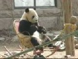 Panda Just Rockin Out - Kinda