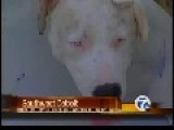 Woman Beats And Cuts 7 Month Old Pitbull For Attacking Her Pet Rooster