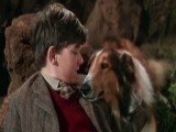 The Top 10 Live Action Animal Buddy Movies