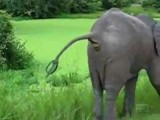 Animals Pooping Compilation