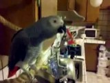 Angry Parrot Cursing At Owner For Pooping On Him
