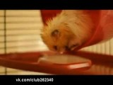 Hamster Falls Asleep, Down