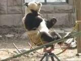Panda Enjoys Rocking Chair