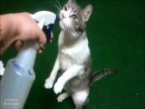 Squirting My Cat