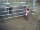 Thistledown Farm - The