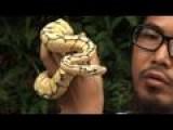 Reptiles Make Perfect Pets In Hong Kong