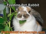 8 Informative Guidelines Of Pet Rabbit Care
