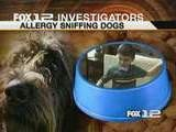 Allergy Sniffing Dogs Helping Children