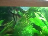 Aids Water In Your Aquarium. How To Acclimate Your Fish?