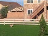 Broomfield Boy Attacked By Coyote