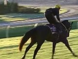 Black Caviar In Line For 15th Win