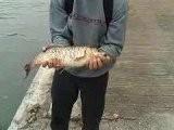 Chub De Gauthier Le 10-10-10 - Fishing Urban Klubb