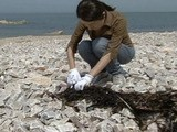 COPC Oil Spill Blamed For Marine Life Dying In China&#039 S Bohai Bay