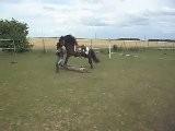 Ethel Et Speedy, D&eacute Tente Au Sol 19 06 2011. SDC10624