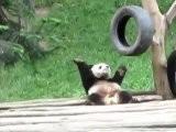 Ein Tanzender Panda