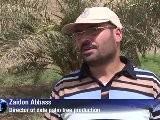 Iraque Busca O Florescer Das T&acirc Maras