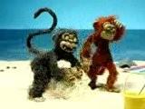 Macaco Tarado