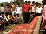 Magician At Sonepur Mela, Bihar