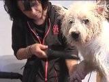 Mobiler Hundefriseur Gabi Artgerechte Pflege F&uuml R Alle