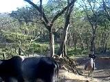 Ride A Caballo