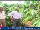 THỜI SỰ19H 05.9.2011, TTXVN, VNEWS, VNA, TRUYỀN H&Igrave NH TH&Ocirc NG TẤN, TTXVN