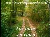 Video &uml ServicePC&uml