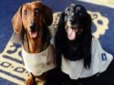 Outrageous Hotel Perks For Pets
