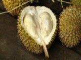 Strange Health Foods: Durian