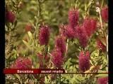 Festa Inauguració Zona Austràlia 27-04 2008 Telenotícies TV3