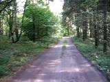 Rowerem Po Lesie