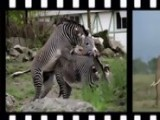 Funny Animal Sex Scene
