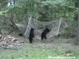 Bear Cubs Test Hammock